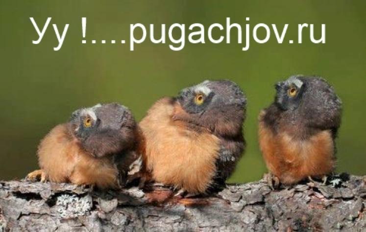 Пугачёвский сайт объявлений